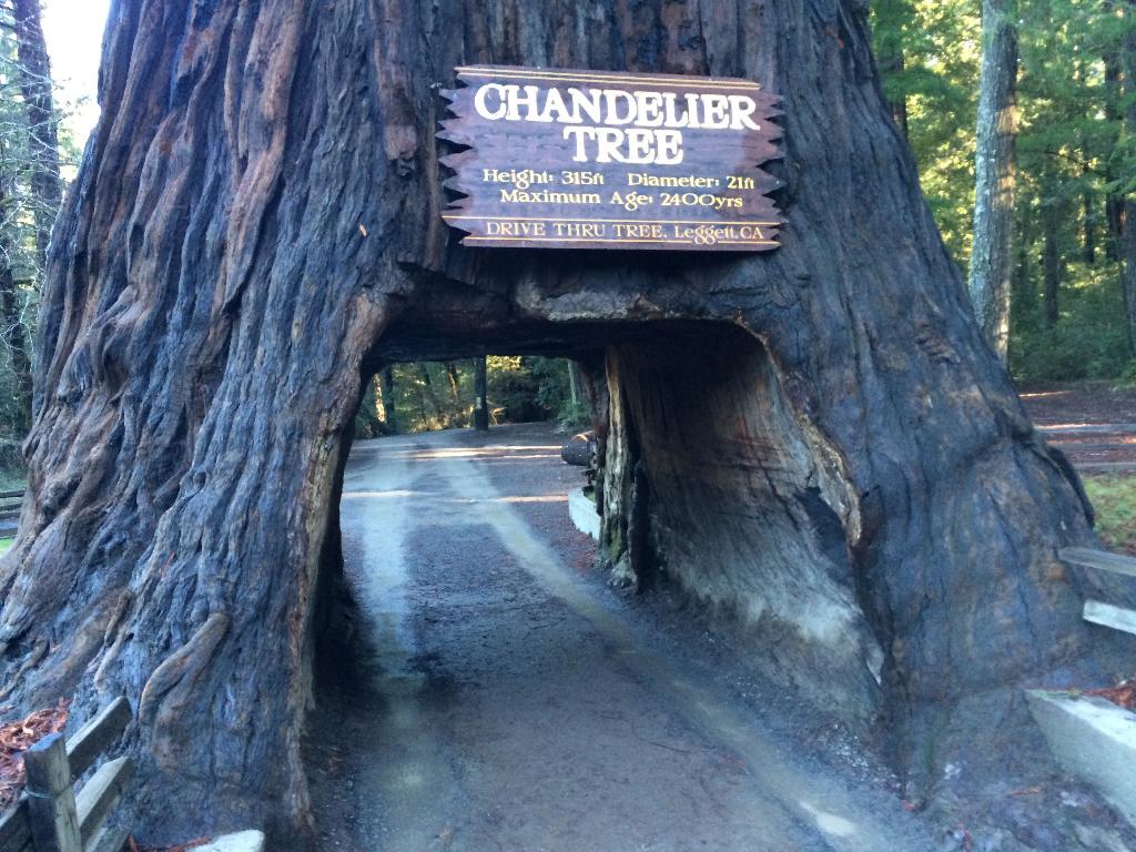World Famous Chandelier Tree California Curiosities