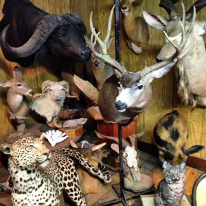 TAXIDERMY MUSEUM