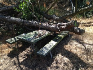 HAUNTED PICNIC TABLE 29